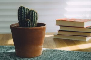 Stack of books with a cactus